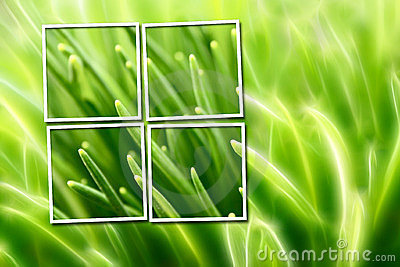 Abstract composition with grass