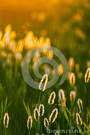 Abstract composition with wild grass