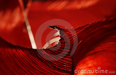Abstract deep red folded surface