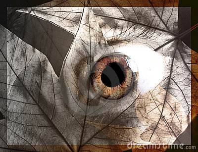 Abstract eye concept