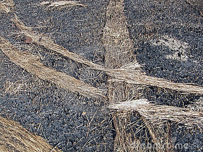 Abstract fired hay on the ground, environment,