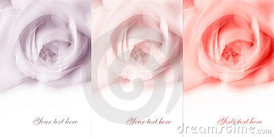 Abstract flower background with empty white space
