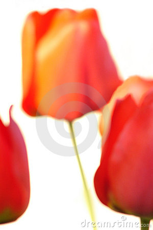 Abstract flowers, decorative beauty