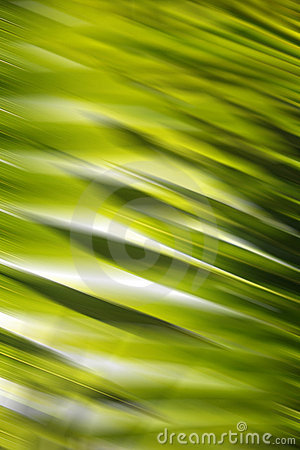 Free Abstract Forest Background Stock Images - 2880334
