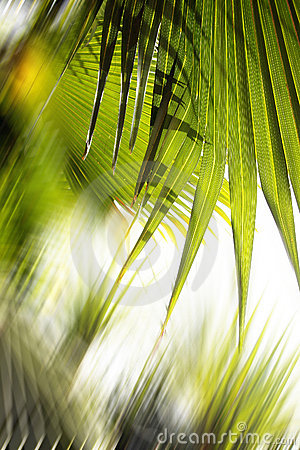 Free Abstract Forest Background Royalty Free Stock Photography - 2880377