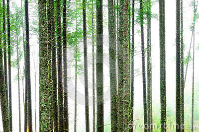 Abstract Forest Blur Background