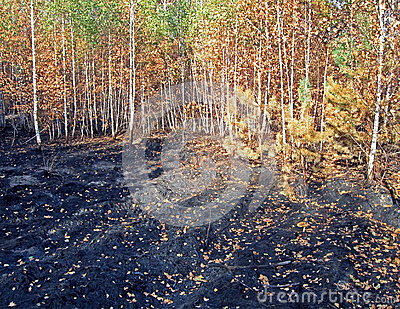 Abstract forest after fire, stress, environment,