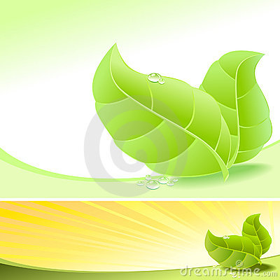Abstract Fresh Green Leaves and Dew Drops - Vector