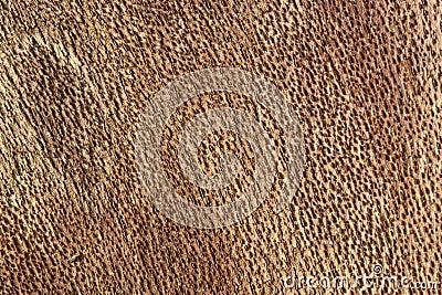Inside bark detail
