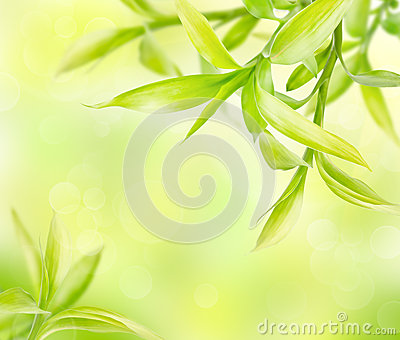 Abstract green background with bamboo