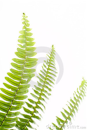 Abstract green fern leaf