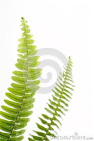 Abstract green fern leaf