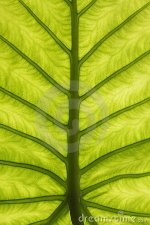 Free Abstract Green Leaf Texture Stock Photos - 18640923