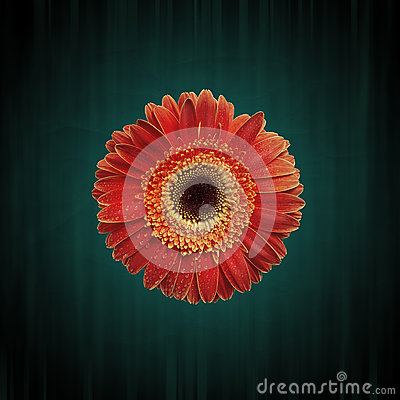 Free Abstract Grunge Flower Background Royalty Free Stock Image - 28824286