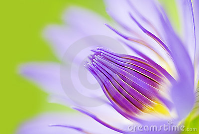 Abstract image of close-up lotus flower water-lily