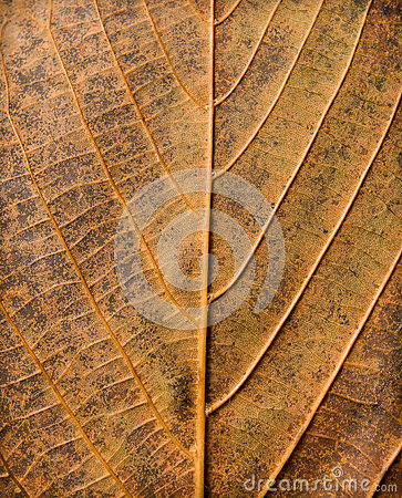 Abstract leaf texture