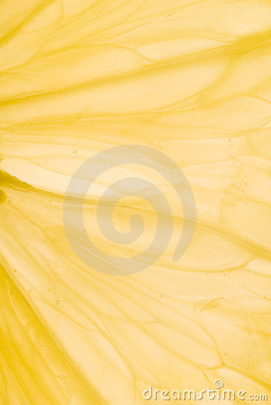 Free Abstract Lemon Veins Royalty Free Stock Images - 3790119
