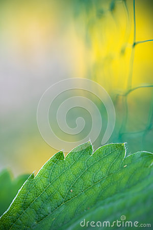 Free Abstract Macro Strawberry Green Leaf With Net In Blurred Background Plant Protection Concept Royalty Free Stock Images - 94612919