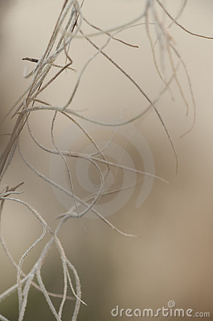 Abstract Nature Background of Spanish Moss