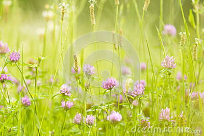 Abstract nature flowers background spring and summer. Stock Photo