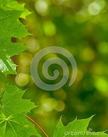 Abstract nature leaves background