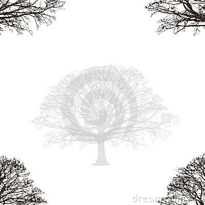 Abstract Oak Design