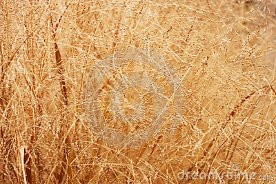 Abstract of orange dry grass