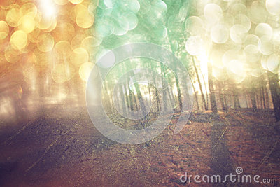 Abstract photo of light burst among trees and glitter bokeh lights. filtered image and textured