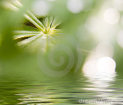 Abstract picture of a nature