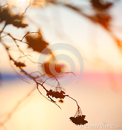 Free Abstract Plant Silhouette At Sunset Royalty Free Stock Images - 61673789