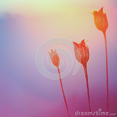 Free Abstract Plant Silhouette At Sunset Stock Photo - 63045660