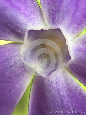 Free Abstract Purple Flower Stock Image - 113310581