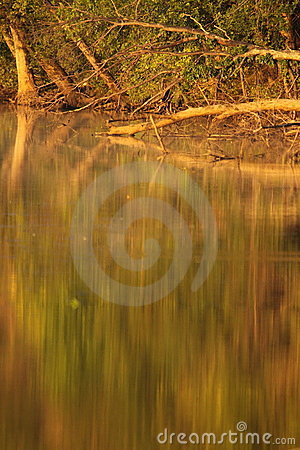Abstract Reflection of Deciduous Trees