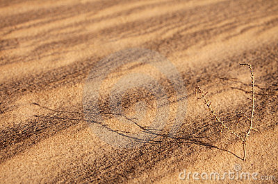 Abstract sand background with sunlight