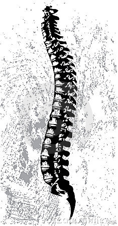 Abstract spinal cord