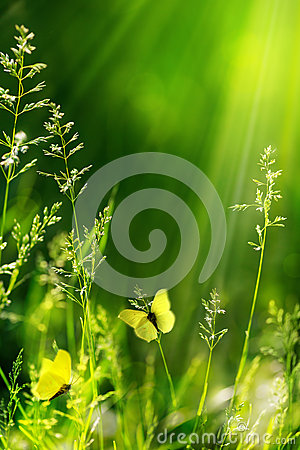 Free Abstract Summer Floral Green Nature Background Royalty Free Stock Images - 31241479