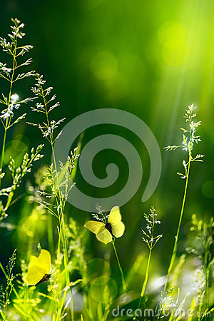 Free Abstract Summer Floral Green Nature Background Royalty Free Stock Photography - 31391847