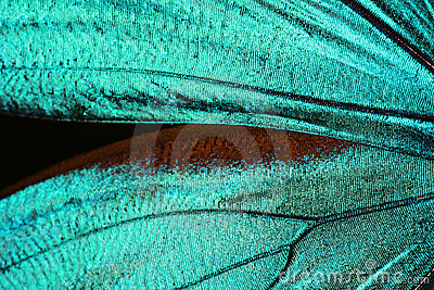 Abstract texture of butterfly wing