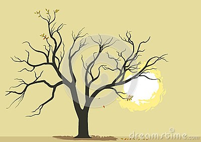 Abstract Tree and Burning Sun Background