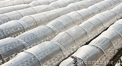 Abstract white greenhouses