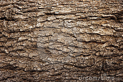 Abstract Wood Texture Bark