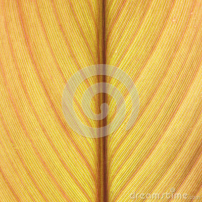 Free Abstract Yellow Leaf Lines Background Texture Royalty Free Stock Image - 34079736