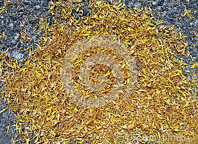 Abstract yellow petals on asphalt, environment,