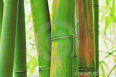 Abstract Zen Bamboo