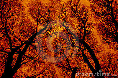 Abstraction in fiery colors