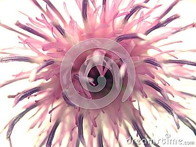 Abstraktes Blumen-Blumenblatt-Muster