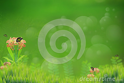 Abtract background of butterfly in green garden as