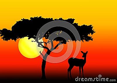Acacia and impala in sunset