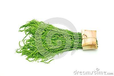 Acacia pennata vegetable