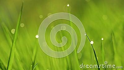 Acercamiento al césped verde vibrante de primavera metrajes